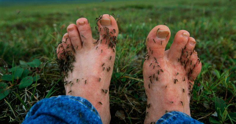 7 Sebab Kenapa Nyamuk Tertarik Dengan Anda