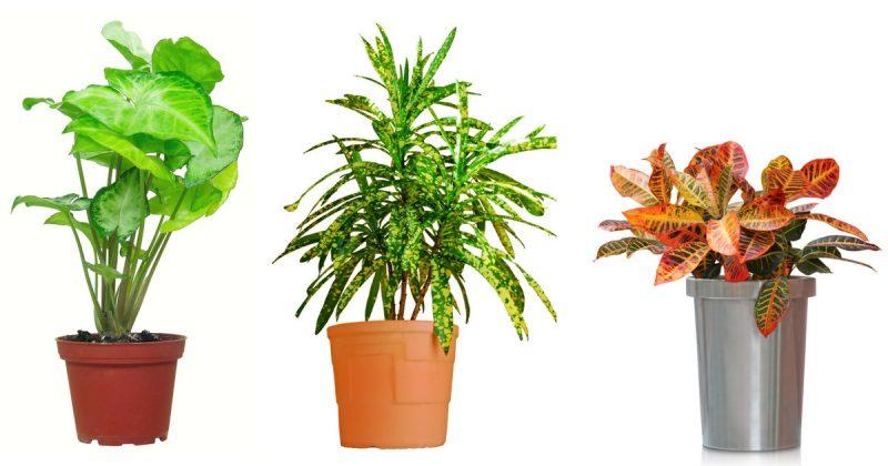 Lakukan 6 Teknik Mudah Ini Halang Indoor Plant Dari Mati