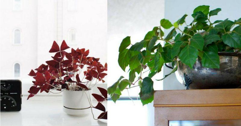 Tak Susah Tanam Indoor Plant Ikut Saja Langkah Mudah Ini Gerenti Hidup Subur