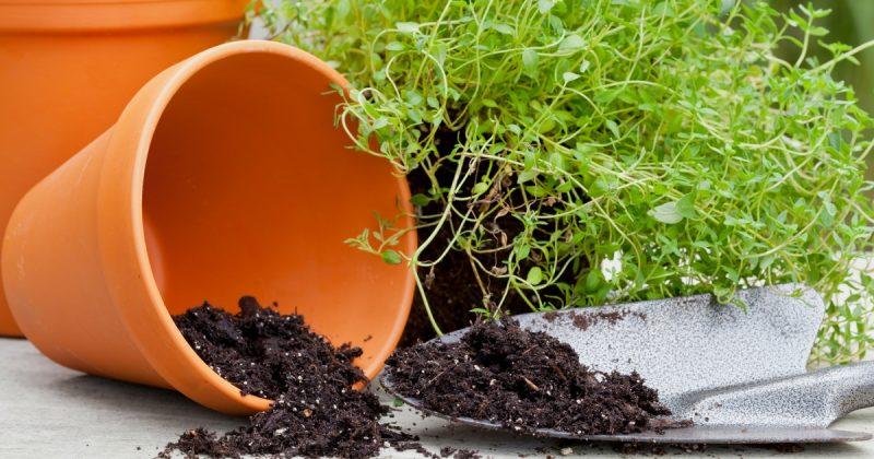 Lepas Ikut Tip Ini Apa Saja Pokok Tanam Dalam Pasu Gerenti Subur
